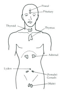 BIOLOGY also HumanBrainAreas further  on location of pituitary gland in humans